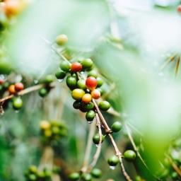 Kahve ile ilgili Önemli Bilgiler